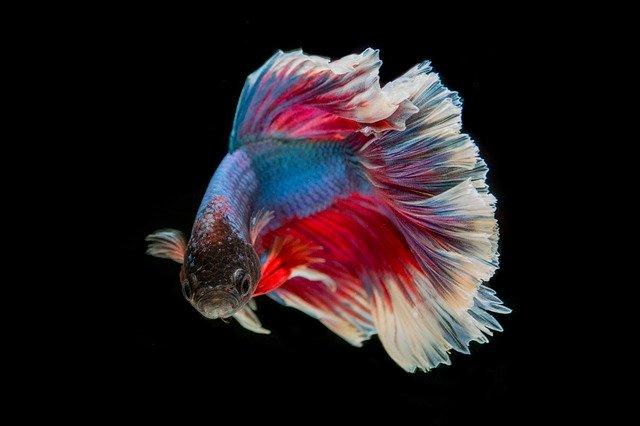 Cara Memasak Ikan Tuna Yang Enak Dan Menarik Untuk Si Kecil