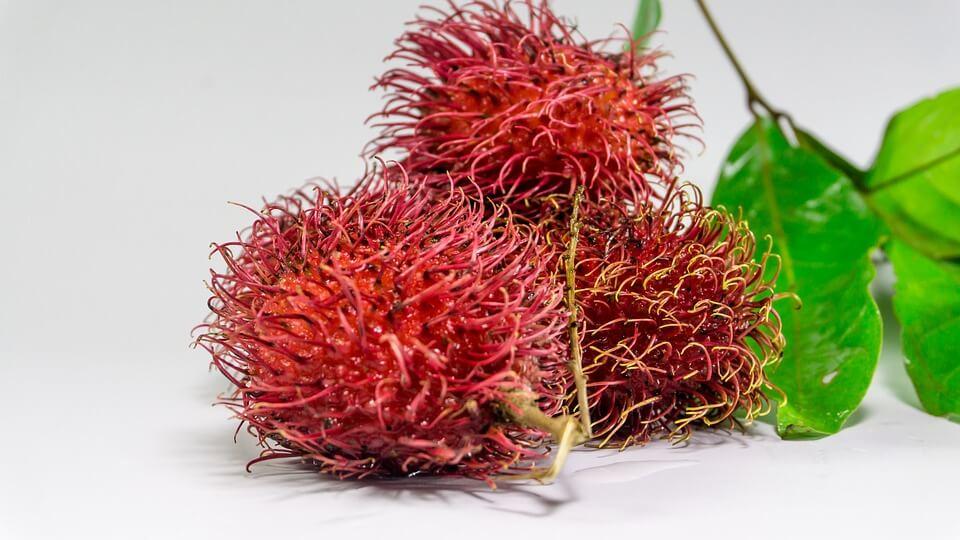 Klasifikasi Rambutan
